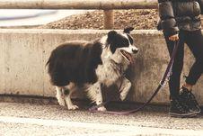 Free Dog Walking On Roadside Stock Photography - 83035562