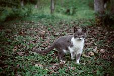 Free Cat In Grass Stock Photos - 83035613