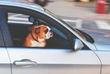 Free Dog Riding In Car Stock Photography - 83035732