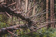 Free Bare Branches On Fallen Tree Royalty Free Stock Image - 83035856