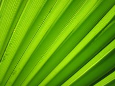 Free Textured Green Pattern Stock Image - 83036081