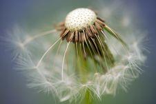 Free Close Up Photography Of Dandelion Stock Image - 83036311
