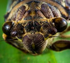 Free Macrophotography Of Insect Stock Photography - 83036342