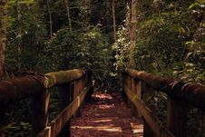 Free Wooden Bridge  Leading Into Jungle Royalty Free Stock Image - 83036416