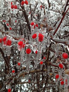 Free Ice Of Red Berries Stock Image - 83036491