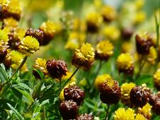 Free Brown And Yellow Cluster Petaled Flower Closed Up Photography Stock Photos - 83036493