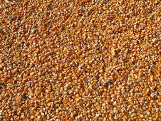 Free Orange Corn Kernels Stock Photography - 83036562