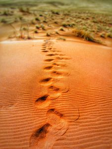Free Foot Prints On Desert During Daytime Royalty Free Stock Images - 83036699
