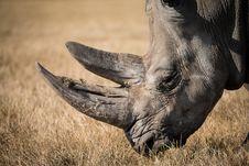 Free Rhinoceros In Field Royalty Free Stock Image - 83036746