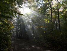 Free Sunbeams In Forest Stock Image - 83036851