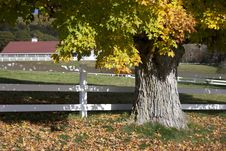 Free Autumn Tree And Fence Royalty Free Stock Image - 83037146
