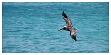 Free Black Sea Gulf Flying On Water Surface During Daytime Royalty Free Stock Images - 83037169