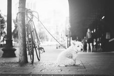 Free Grayscale Photo Of Leashed Dog Near Tree Royalty Free Stock Photo - 83037305