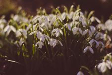 Free Field Of White Flowers During Daytime Royalty Free Stock Photo - 83037495