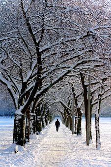 Free Man In Black Jacket Walking On Snowy Tree During Daytime Royalty Free Stock Photo - 83037545
