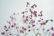 Free Purple And Yellow Wildflowers Stock Images - 83037894