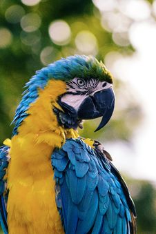 Free Blue And Yellow Macaw Stock Images - 83038014