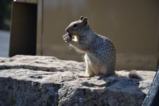Free Squirrel On Rock Stock Photos - 83038043