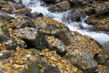 Free Autumn Leaves On Rocks In Stream Royalty Free Stock Image - 83038376