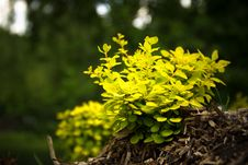 Free Green Shrub Royalty Free Stock Photos - 83038468