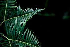 Free Green Fern On Black Stock Images - 83038554