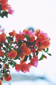 Free Orange Flowers On Branches Royalty Free Stock Photo - 83038735