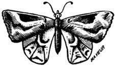 Free Papillon-006 Stock Photos - 83038983