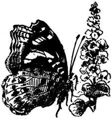 Free Papillon-012 Royalty Free Stock Photos - 83039248