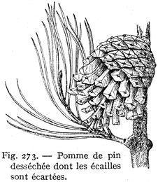 Free Pin-pomme De Stock Images - 83039774