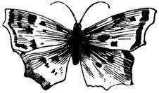 Free Papillon-005 Stock Photos - 83039813