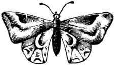Free Papillon-010 Stock Photo - 83039840