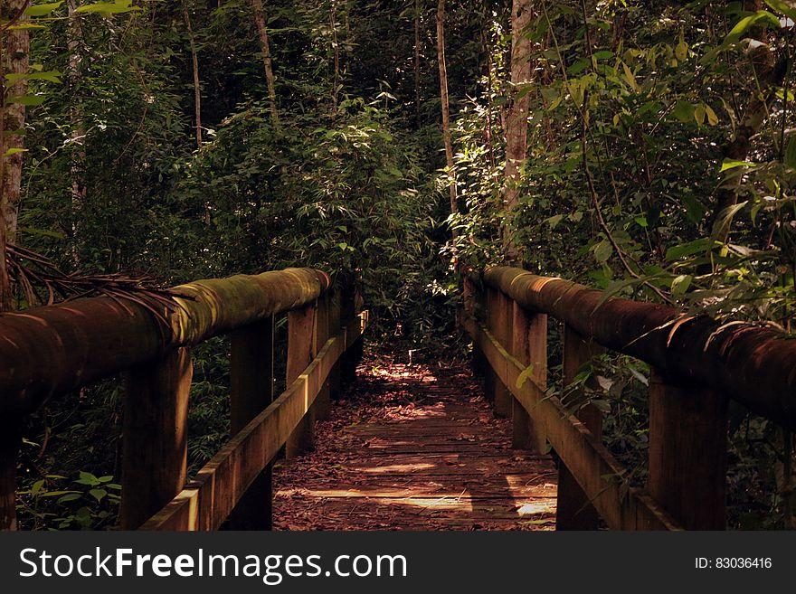 Wooden bridge leading into jungle