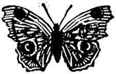 Free Papillon-007 Royalty Free Stock Photography - 83040777
