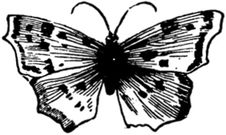 Free Papillon-009 Stock Images - 83041144