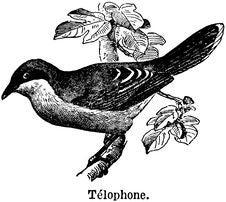 Free Télophone Stock Photography - 83053962