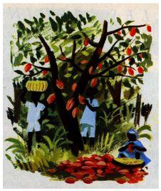 Free Cacao Royalty Free Stock Photo - 83054815