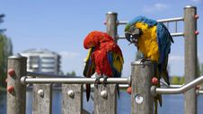 Free Parrots On Waterside Perch Royalty Free Stock Photo - 83057755