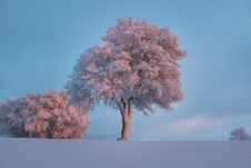 Free Pink Leaved Tree During Daytime Royalty Free Stock Photography - 83057847