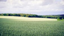 Free Green Grass Field With Trees In The Distance Royalty Free Stock Images - 83057979