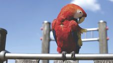 Free Red Parrot On Bar On Sunny Cloudless Day Stock Photography - 83058182