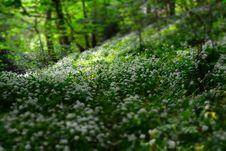 Free White Petal Flowers On Field With Green Trees At Daytime Stock Image - 83058261