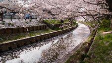 Free Drainage Between Cherry Blossom Tree During Daytime Stock Photo - 83058290