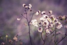 Free White Clustered Petaled Flower Royalty Free Stock Photos - 83058708