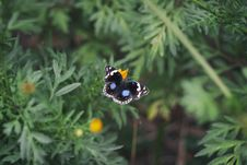Free Black White And Blue Butterfly On Yellow Flower Stock Images - 83058874