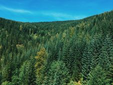 Free High Angle Photograph Of Green Forest Trees Royalty Free Stock Images - 83059029