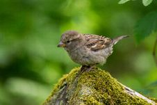 Free Grey And White Small Bird On Grey Moss Covered Rock Tilt Screen Photography Royalty Free Stock Photo - 83059205