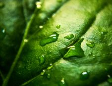 Free Close Up Photo A Water Moist Green Leaf Royalty Free Stock Photos - 83059228