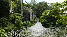 Free White Net Bridge Across Forest Under Clear Sky Stock Image - 83059471