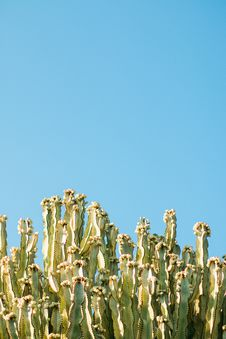 Free Cacti Plants And Blue Sky Royalty Free Stock Images - 83059479