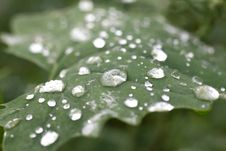 Free Raindrops On Green Leaf Royalty Free Stock Photos - 83059508